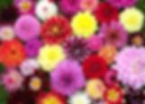 dahlia-wedding-flowers.jpg