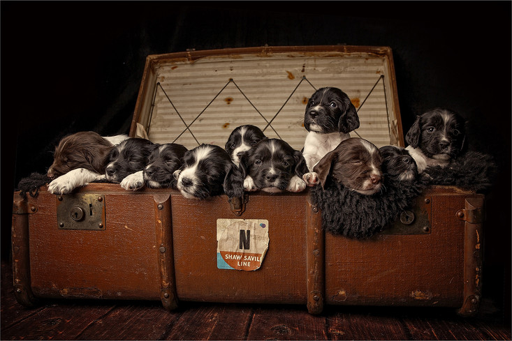Suitcase full of trouble