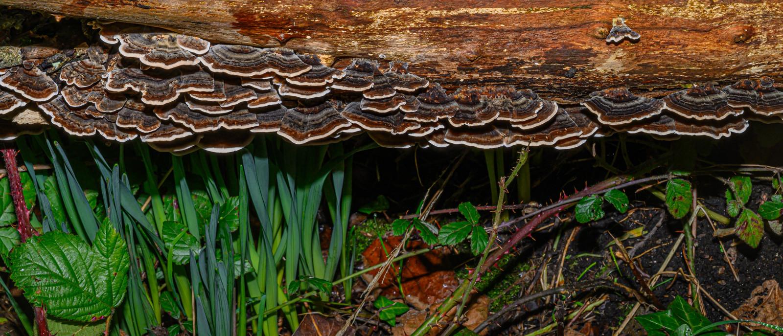 Fallen Tree Fungi