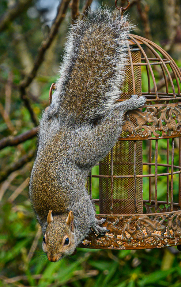 Squirrel checking the Bird Proofing