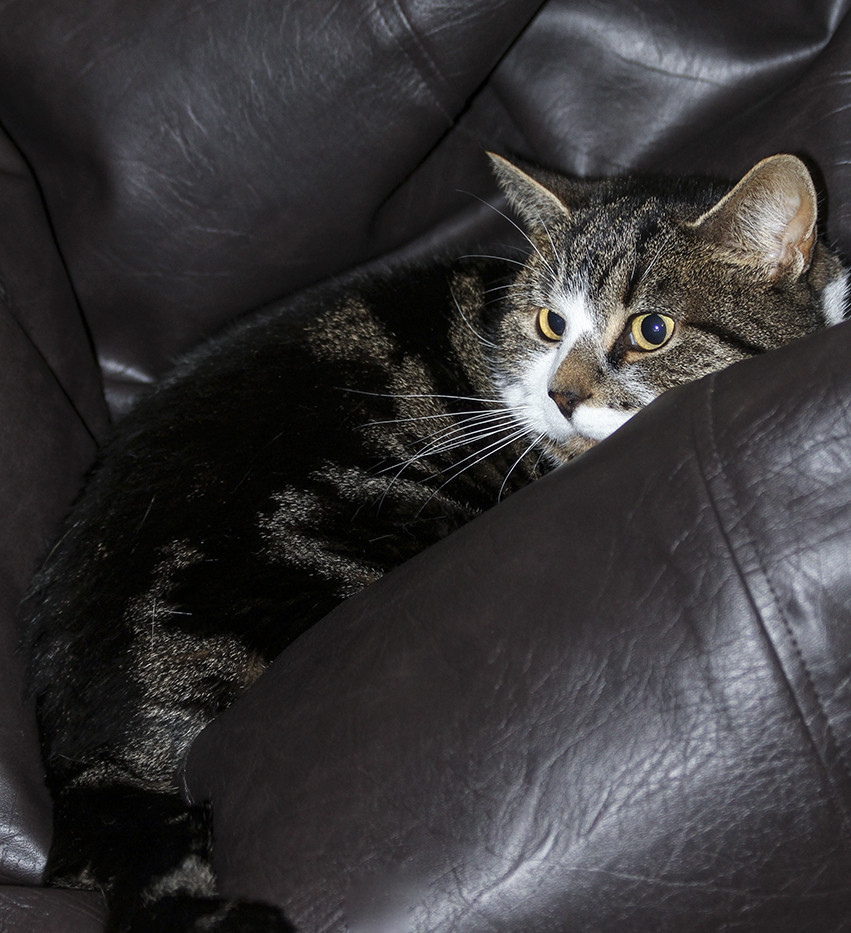 Squatter Rights to the Beanbag