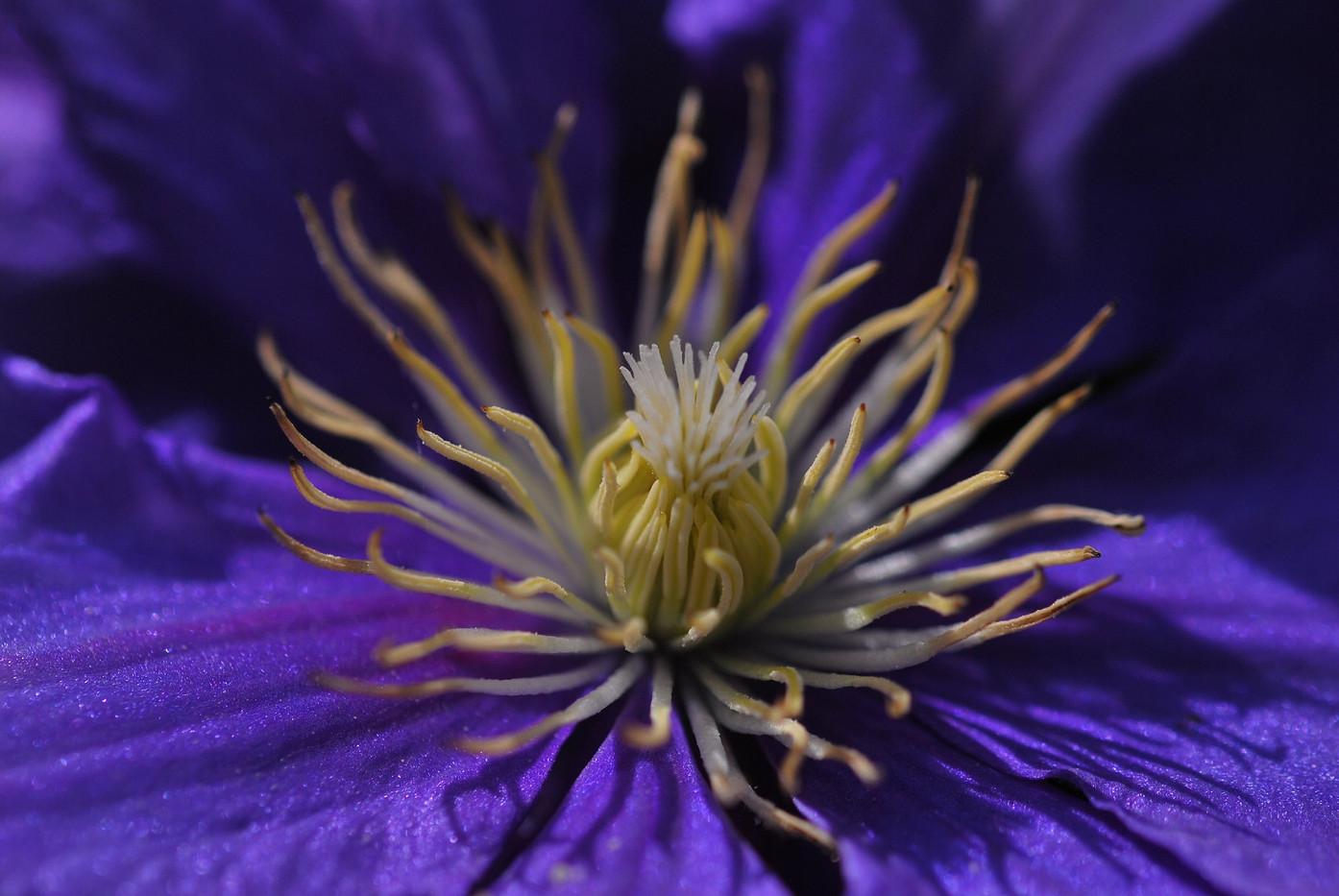 Creative Flower Landscape