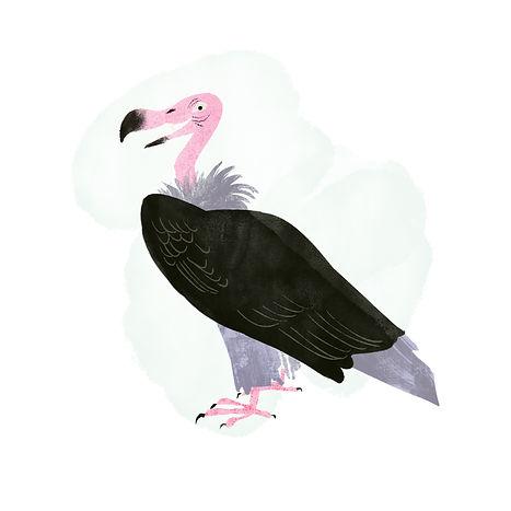 vulture copy.jpg