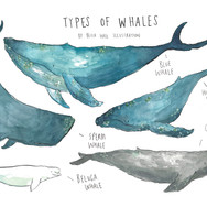Types of Whales