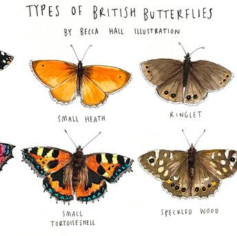 Types of British Butterflies