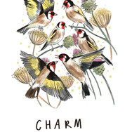 Charm of Golfdfinches