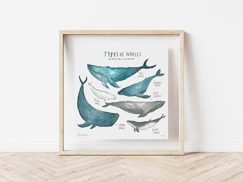Print - Types of Whales