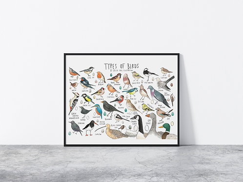 Limited Edition Types Of Bird A3 Print