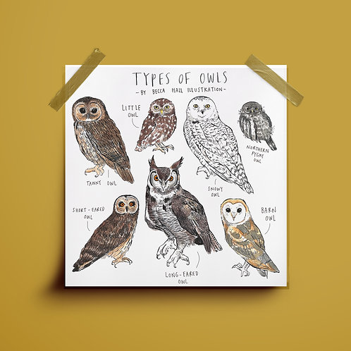 Print - Types of Owls
