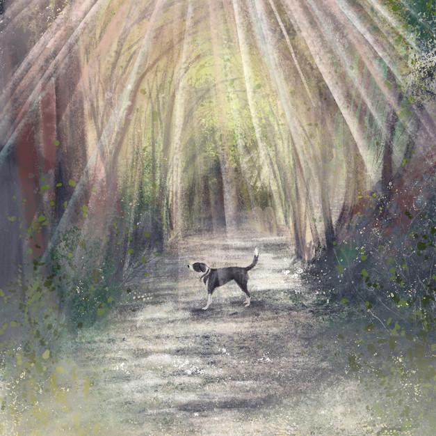 Dog in Light