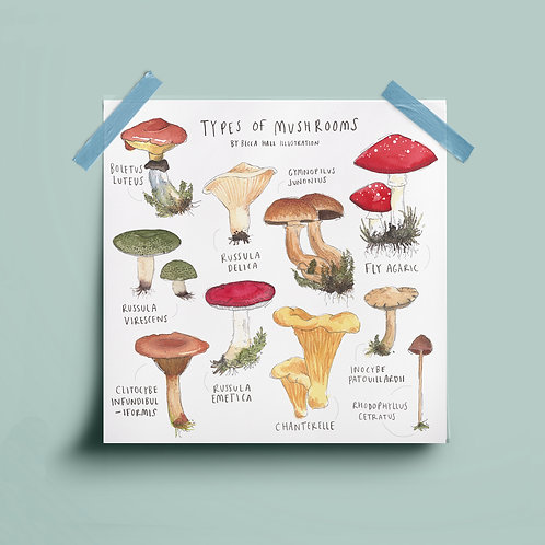 Print - Types of Mushrooms