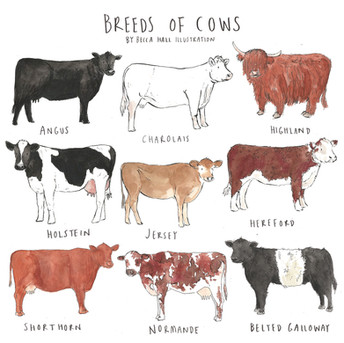 Breeds of Cows