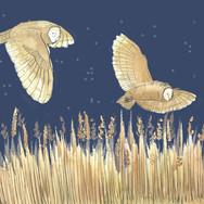 Flying Owls