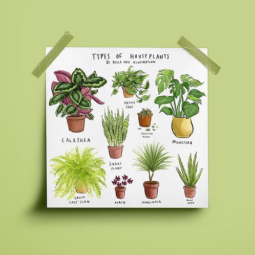 Print - Types of Houseplants