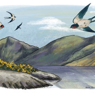 Swallows and Fells