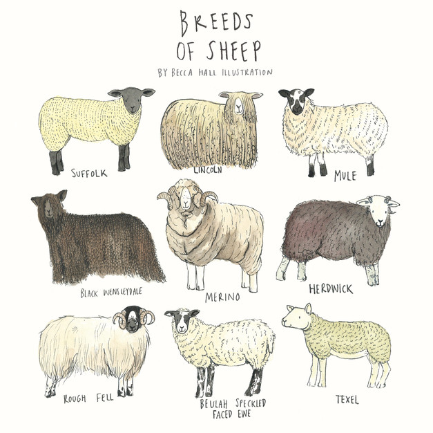 Breeds of Sheep