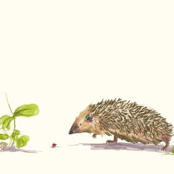 Hedgehog meets a Ladybird