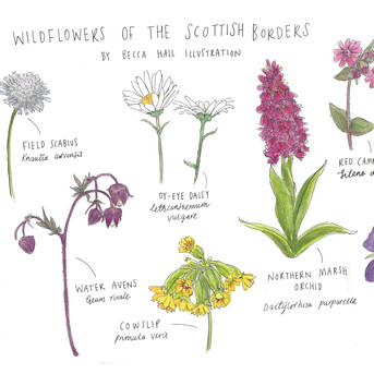 Types of Scottish Flowers