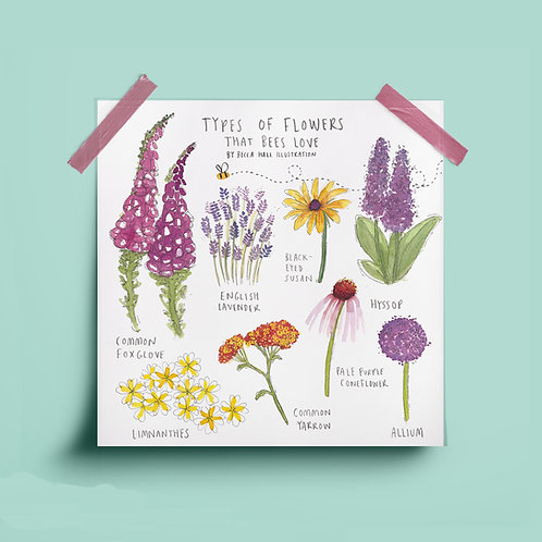 Print - Types of Flowers that Bees Love