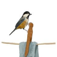 Bird on Washing