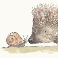 Hedgehog and Snail