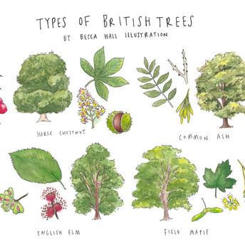 Types of British Trees
