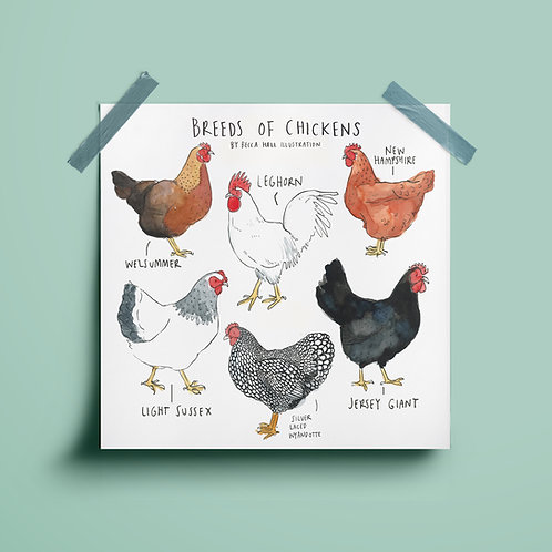 Print - Breeds of Chickens