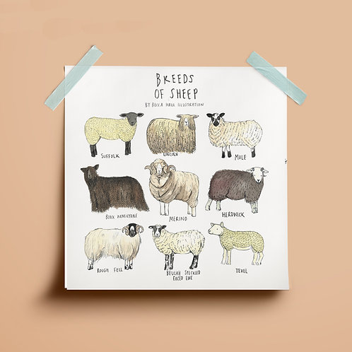 Print - Breeds of Sheep