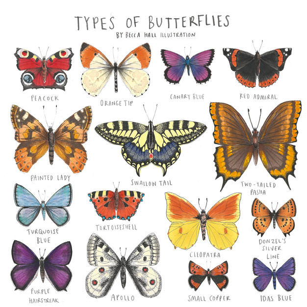 Types of Butterfly