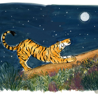 Tiger and Stars