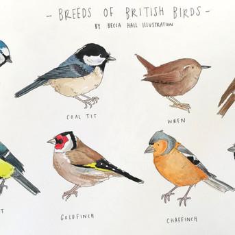 Types of British Birds