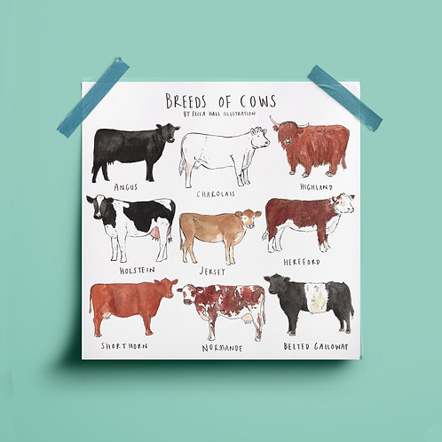 Print - Breeds of Cows