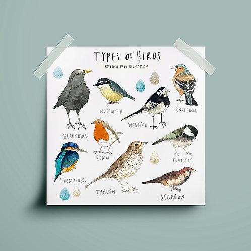 Print - Types of Birds