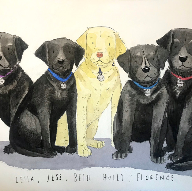 Pack of Labs!