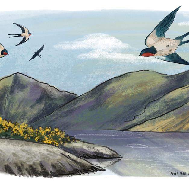 Swallows & Fells