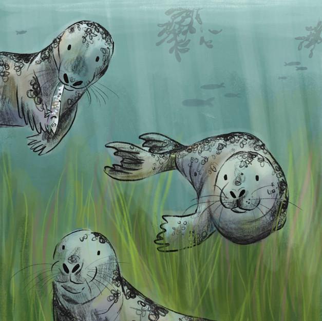 Swimming Seals