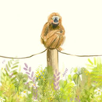 Gibbon in Paradise