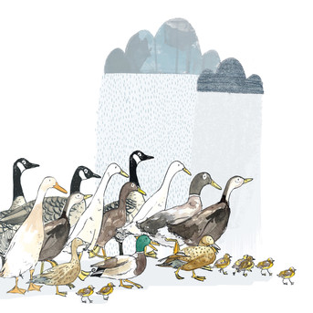 Ducks in Rain