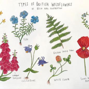 Types of British Wildflowers