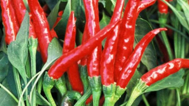 Red Thai Hot Pepper