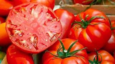 Beefsteak Tomato Plant