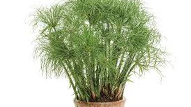 Gracefull Grasses
