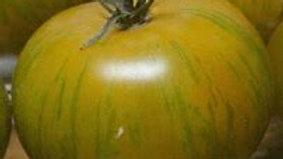 Herloom Zebra Tomato Plant