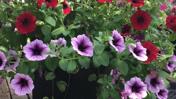 Large Planter mixed