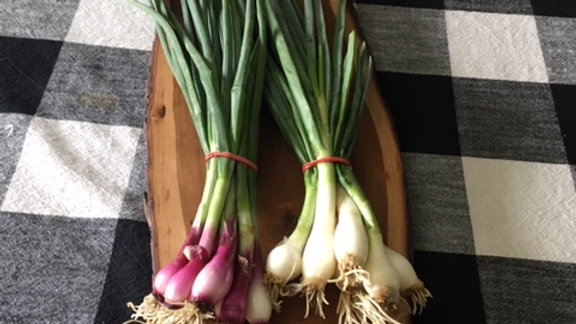 Green and red onions - 2 bunches