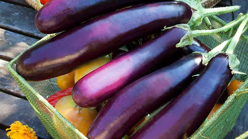 Long Eggplant Plant