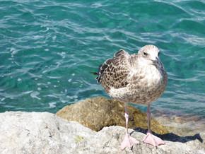 Day 12 Pompei, Sorrento, Capri