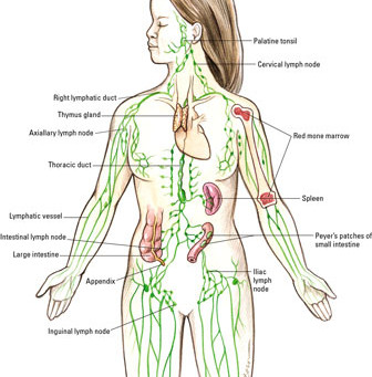 Lymphatic Massage: 5 Things You Need to Know