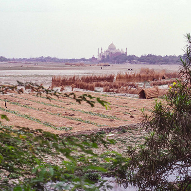 Agra In dry season people grow plants at the bottom of the Yamuna river