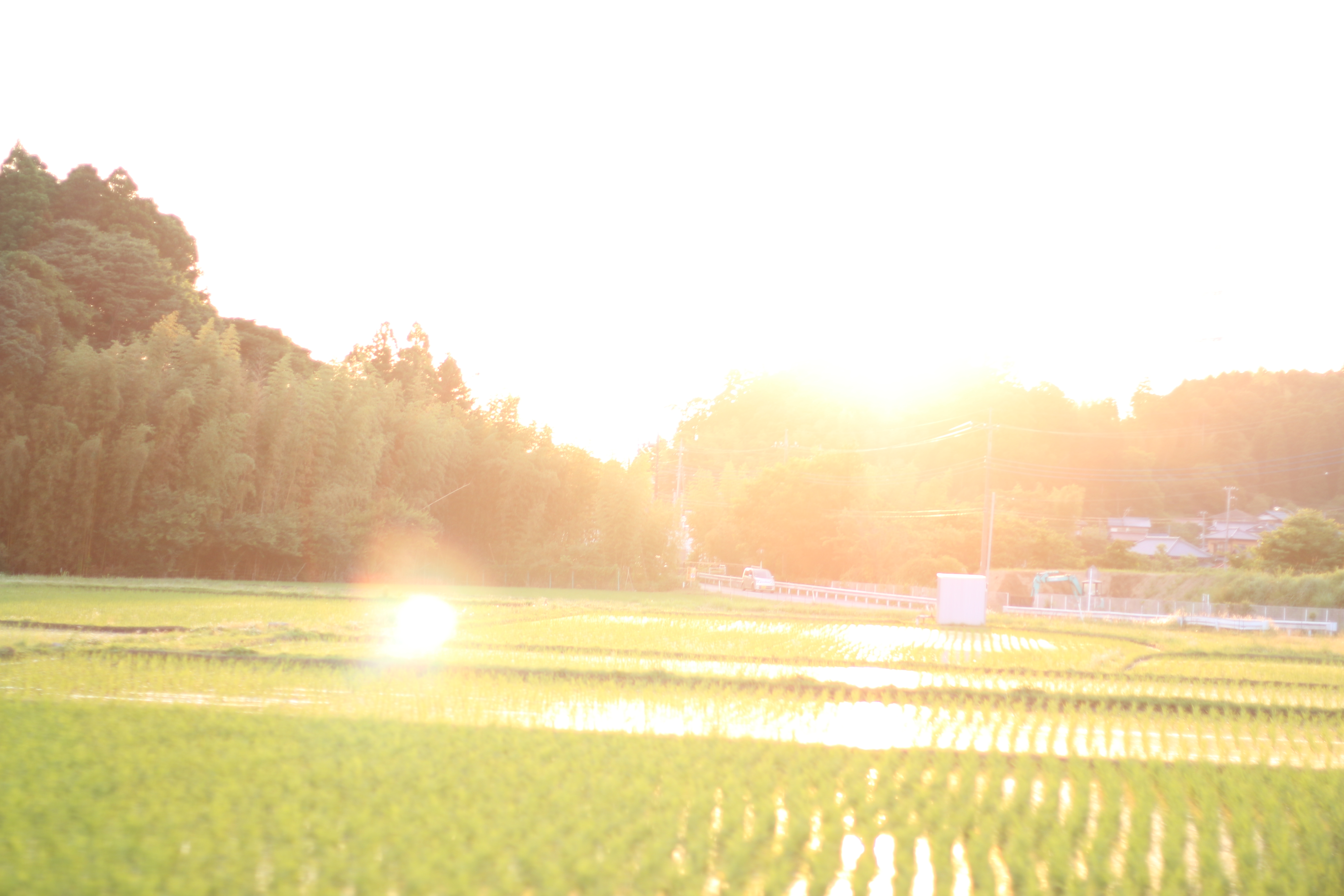 水田を照らす夕日